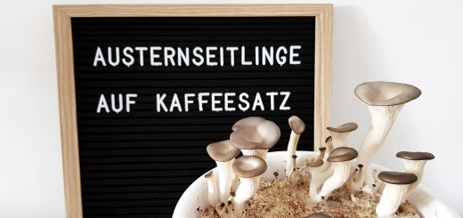 Austernpilze auf Kaffeesatz DIY Slider