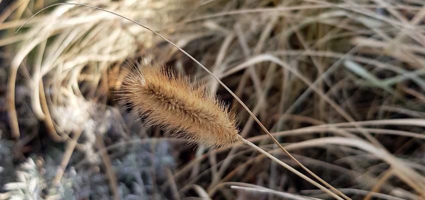 Gräser schneiden im Frühjahr - Slider