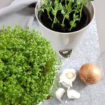 Microgreens Erbsen Kresse Grüneliebe City Garden sponsored by EMSA