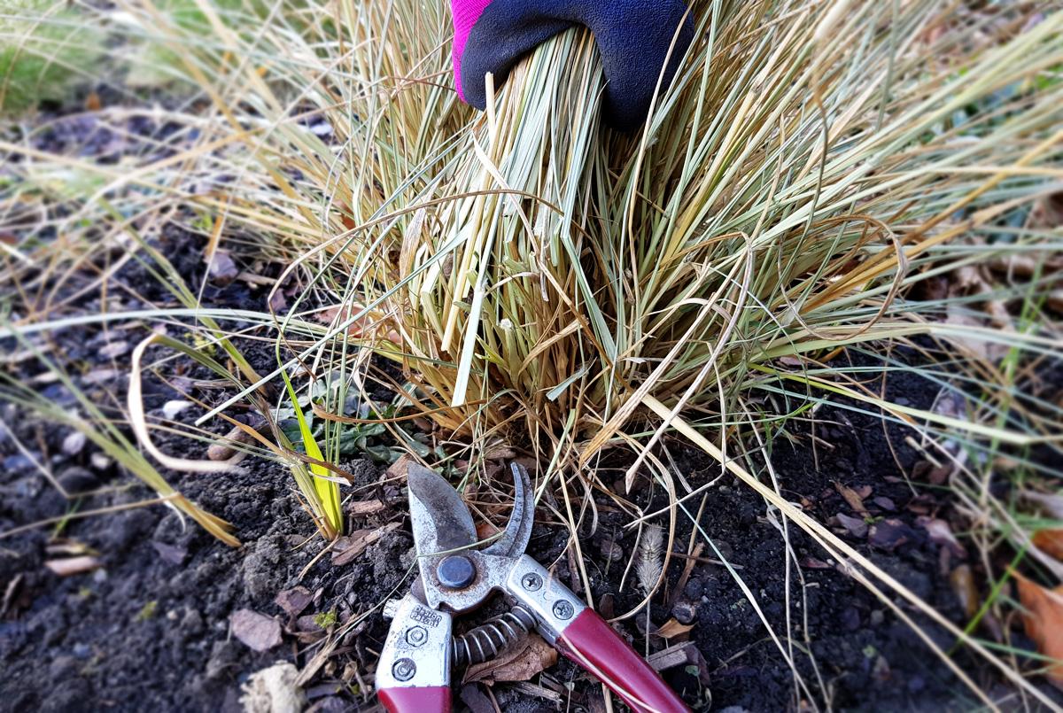 Ziergräserschnitt - Gräser schneiden im Frühjahr