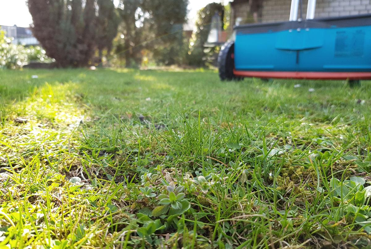 Frischekur im Frühjahr Rasendünger mit Langzeitwirkung