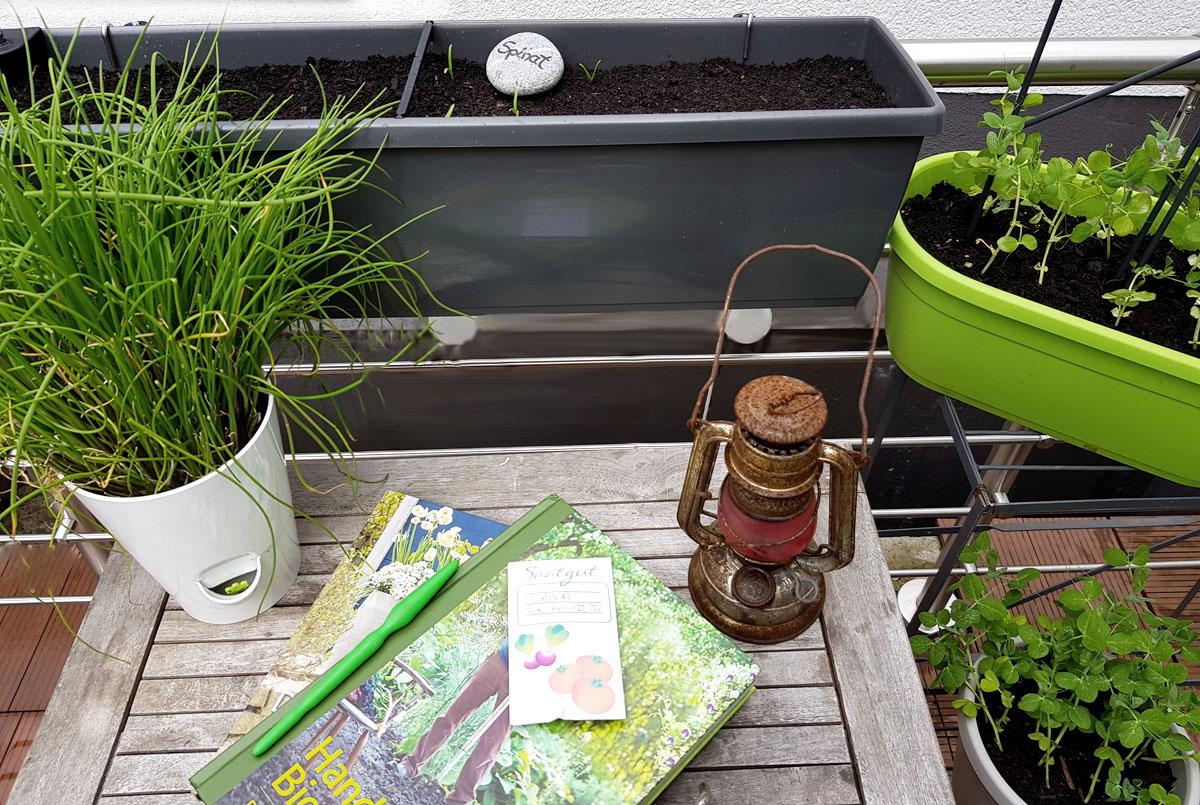 Grüneliebe City Garden Spinat säen im Balkonkasten