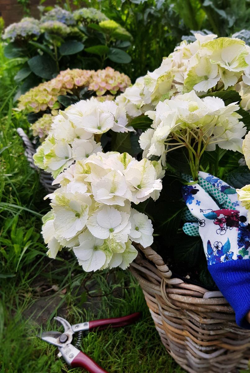 Hortensienkranz DIY Muttertag Magical Hortensia