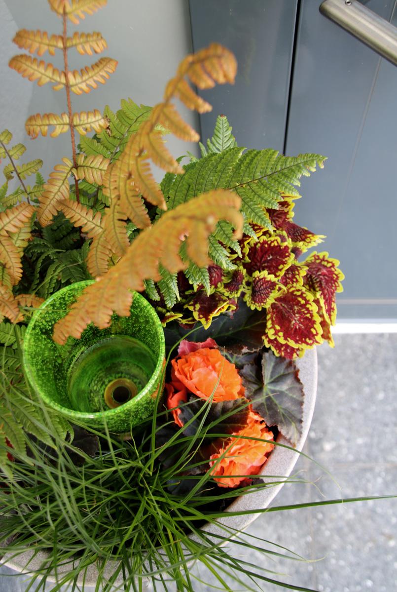Willkommen zu Hause! Pflanzideen für den schattigen und sonnigen Hauseingang mit Scheurich