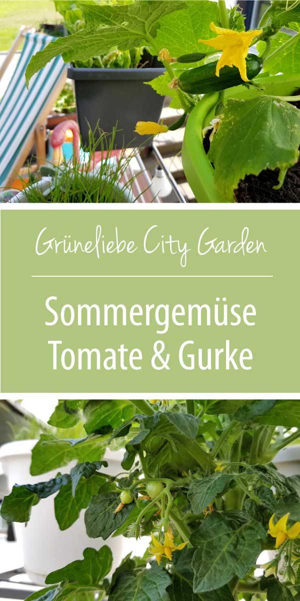 Sommergemüse Tomate und Gurke auf dem Balkon Grüneliebe City Garden mit EMSA