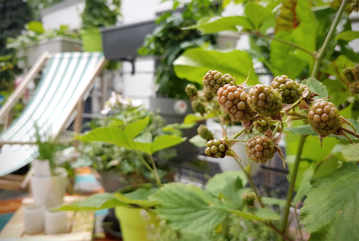 Werbung // Brombeeren Obstgarten auf dem Balkon EMSA Grüneliebe City Garden