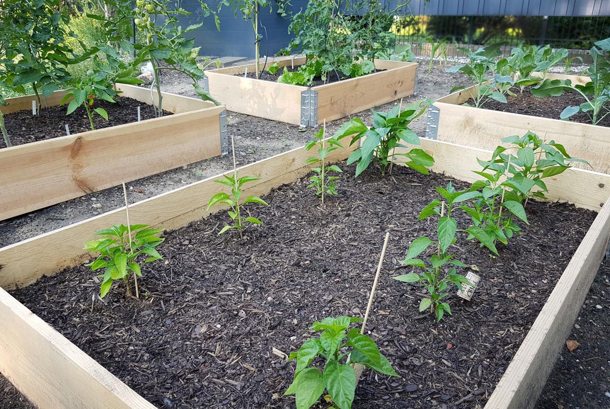Palettenrahmen als Gemüsebeet - Garten im Mai