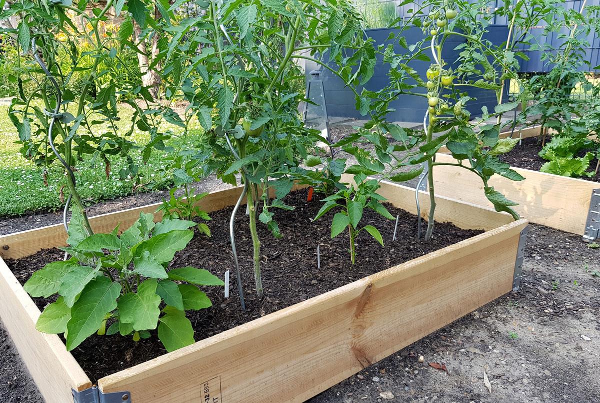 Gemüsegarten mit Palettenrahmen - Garten im Mai