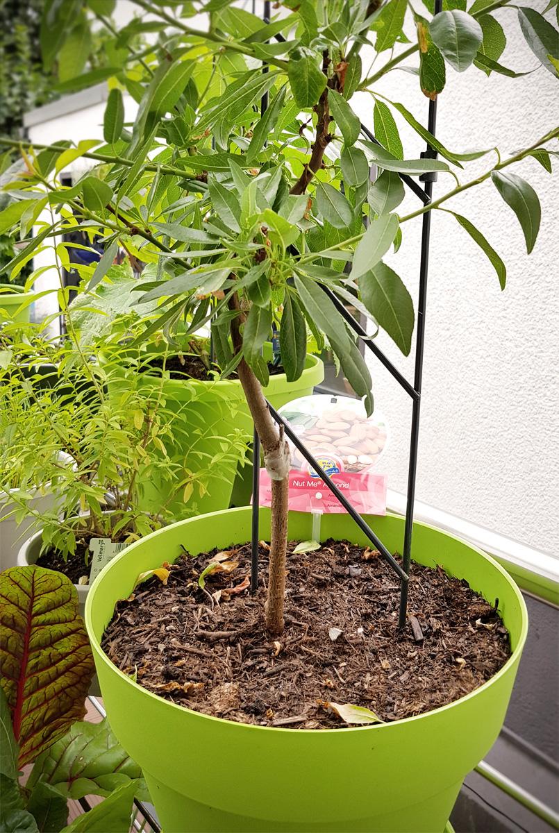 Werbung // Mandelbäumchen Obstgarten auf dem Balkon EMSA Grüneliebe City Garden