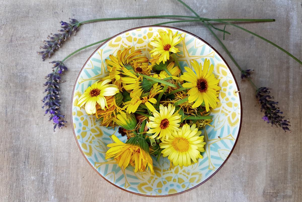 Ringelblumen-Lavendel-Salbe für Gärtnerhände