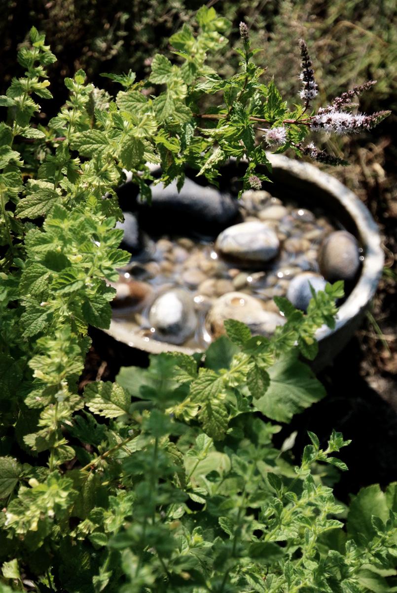 Wasser für Vögel und Insekten im Garten