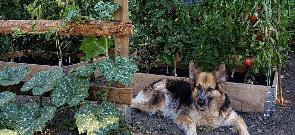 Garten im Juli - Hundstage im Sommer