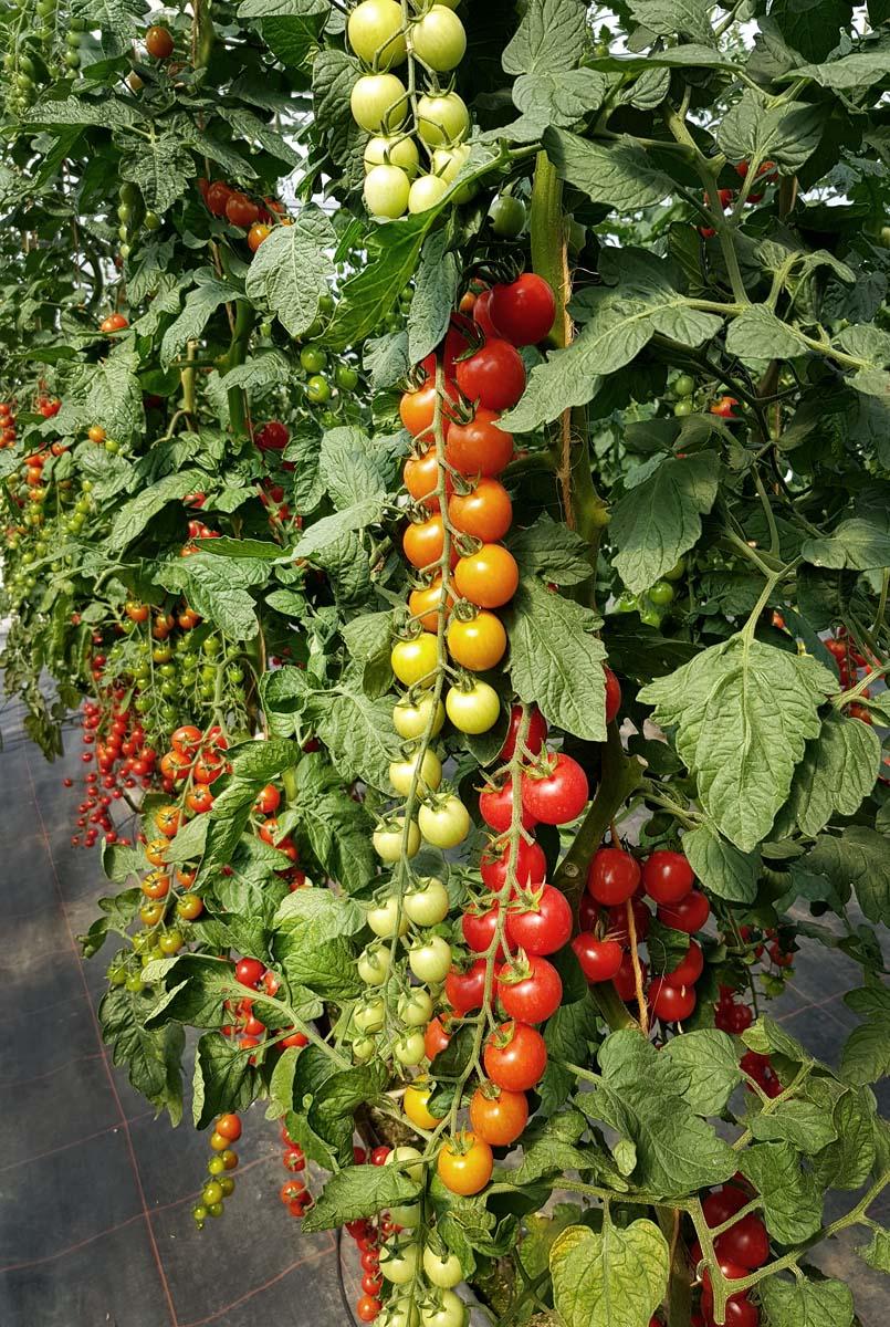 Presseevent | Gartenbloggertreffen