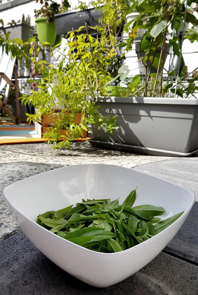 Getrocknete Tomaten vom Balkon Grüneliebe City Garden