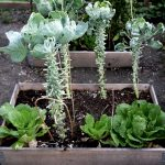 Gartenarbeit im Oktober - Gemüsegarten