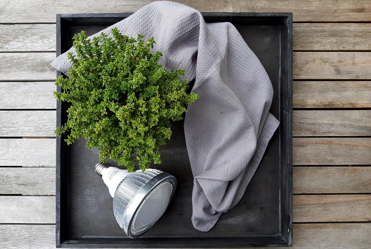 Mediterrane Pflanzen Ueberwintern mit Pflanzenlampen - Werbung