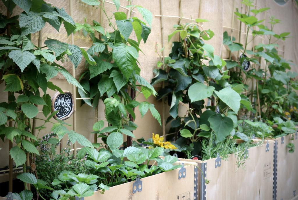 Pflanzen für den Schatten - Gemüse, Obst und Kräuter