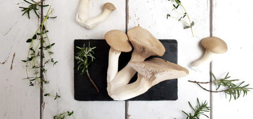 Kräuterseitlinge selber züchten - Fertigkkultur im Haus