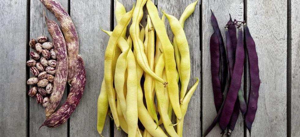 Milpa Gemüsebeet drei Schwestern Mischkultur Mais Bohnen Kürbis