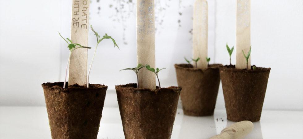 Aussaat mit Pflanzenlampe - Pflanzenanzucht mit Experiment: Wie wichtig ist das Licht für die Anzucht?