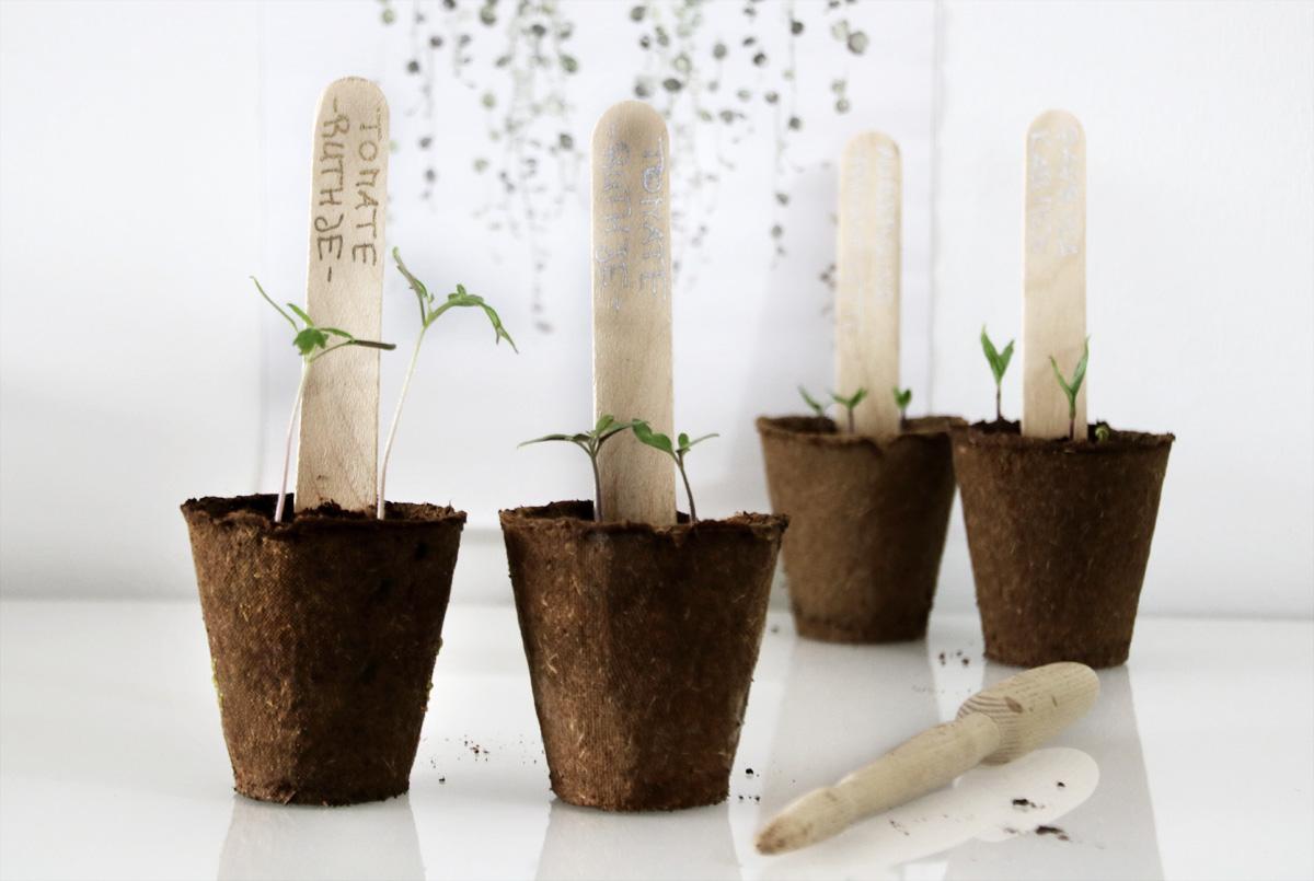 Was benötigt man für die Anzucht von Gemüsepflanzen?