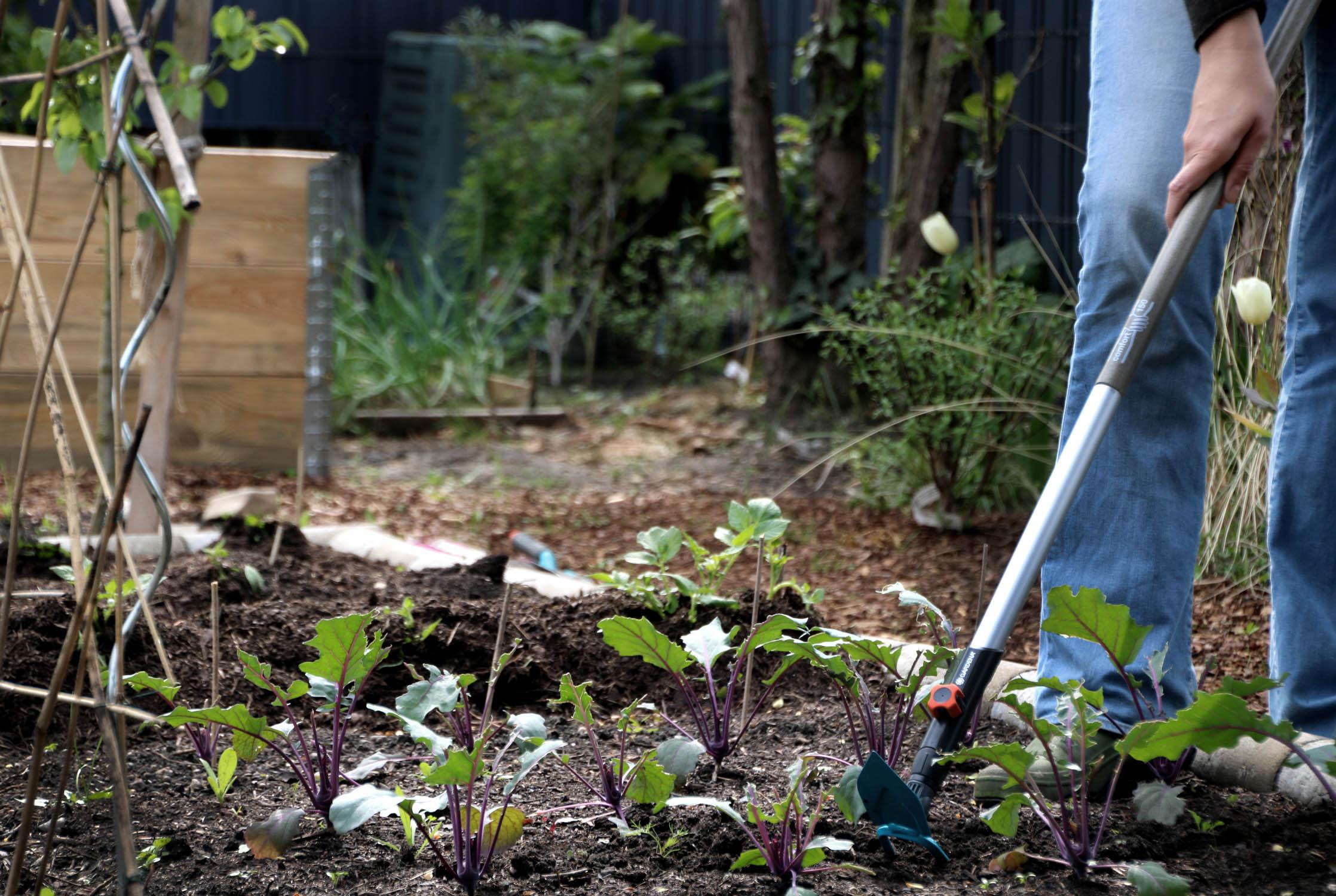 Gartenhacke, Grubber, Kleinrechen – Welche Gartengeräte benötigt man im Gemüsegarten?