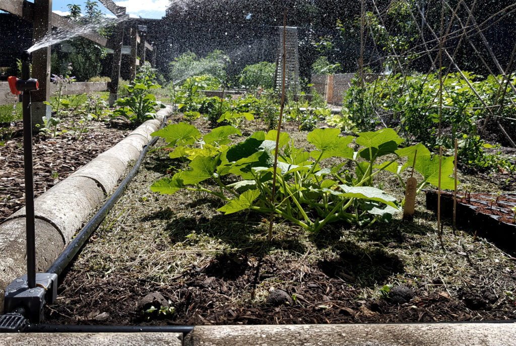 Bewässerung im Gemüsegarten_Gardena