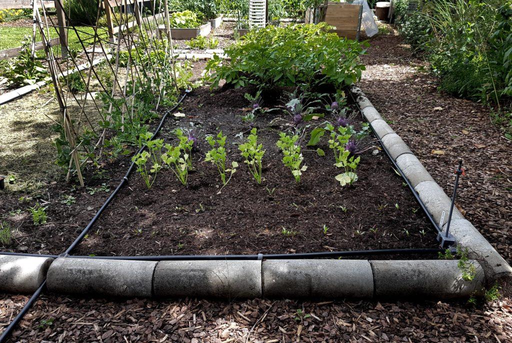Bewässerung im Gemüsegarten_Gardena Micro Drip Set Pflanzfläche