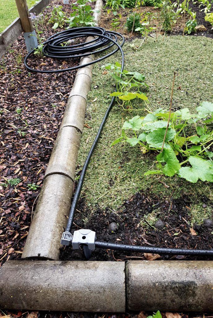 Bewässerung im Gemüsegarten_Gardena Micro Drip Verlegung