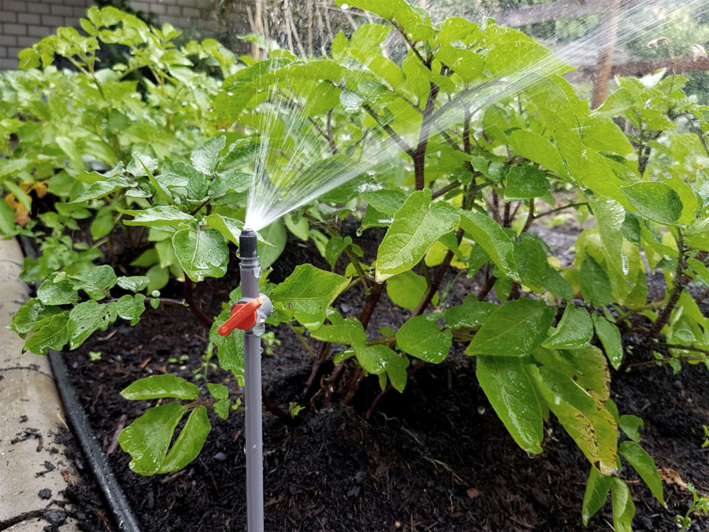 Bewässerung im Gemüsegarten - Micro Drip