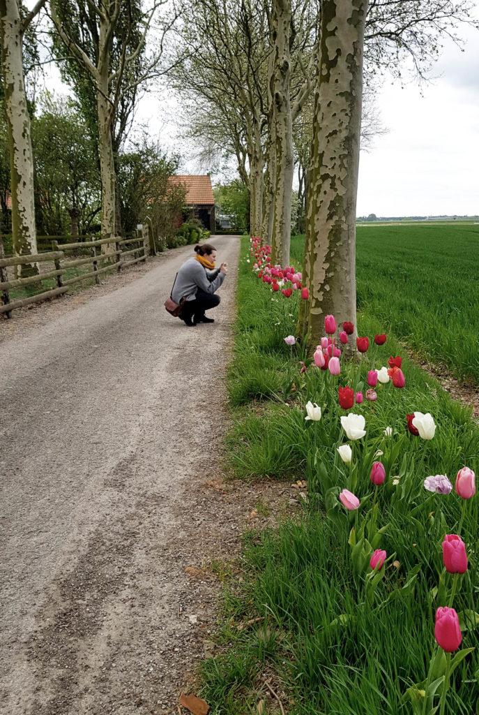 Tuin t'Hofje holländischer Gartentraum