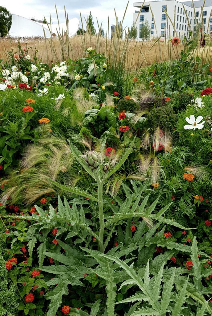 Artischocke und Blumen_Mischkultur aus Nutzpflanzen und Zierpflanzen