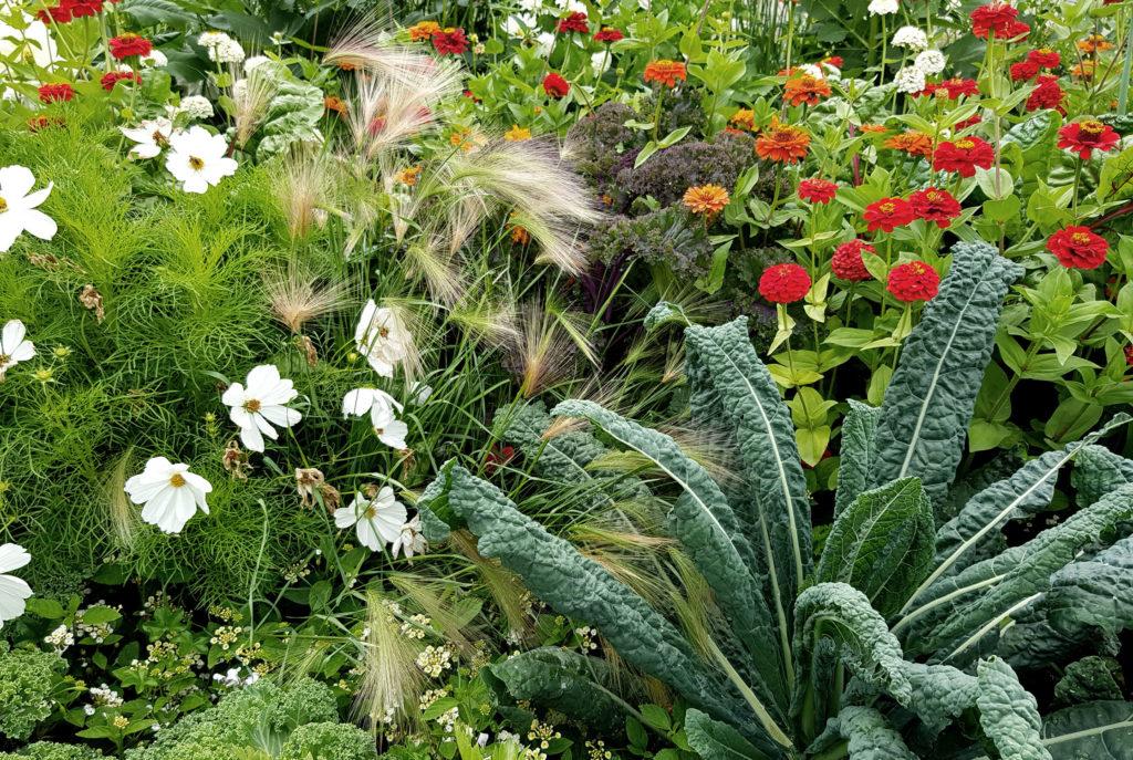 Gemüse und Blumen_Mischkultur aus Nutzpflanzen und Zierpflanzen