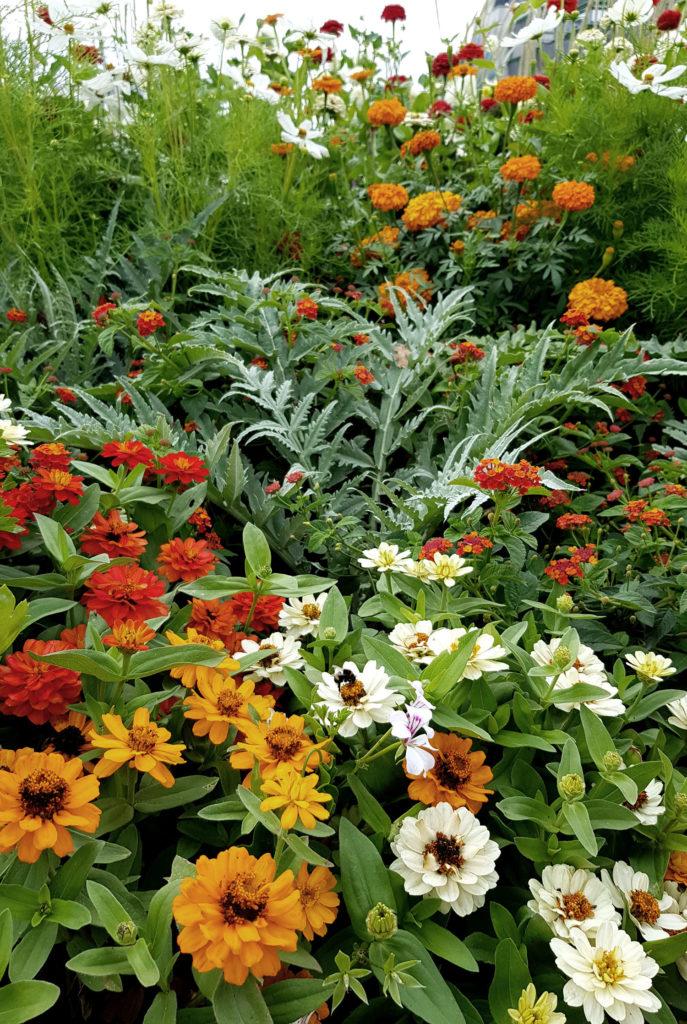 Mischkultur aus Nutzpflanzen und Zierpflanzen