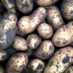 Was kann man nach Kartoffeln pflanzen