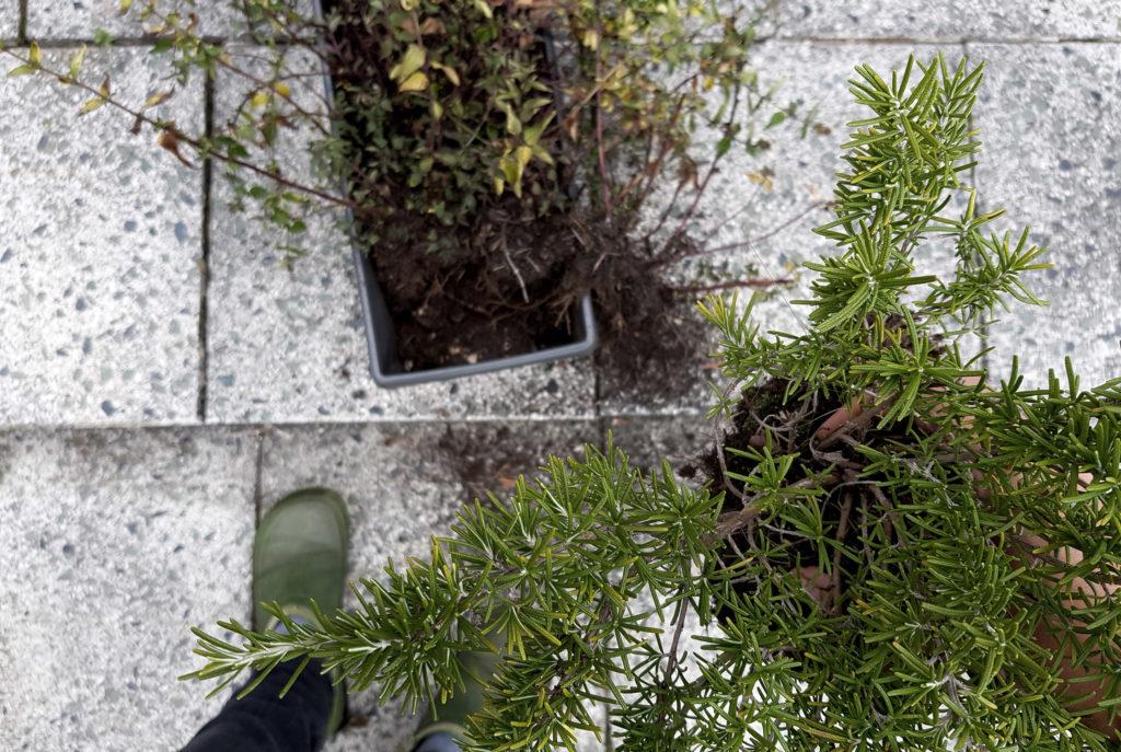 Terrasse Tipps für die Reinigung