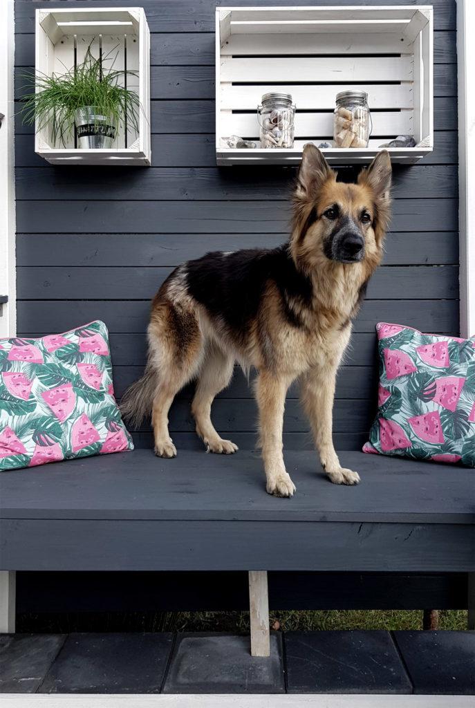 Grillplatz mit Sitzbank Chillecke mit Hund
