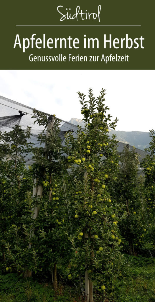 Apfelernte in Südtirol