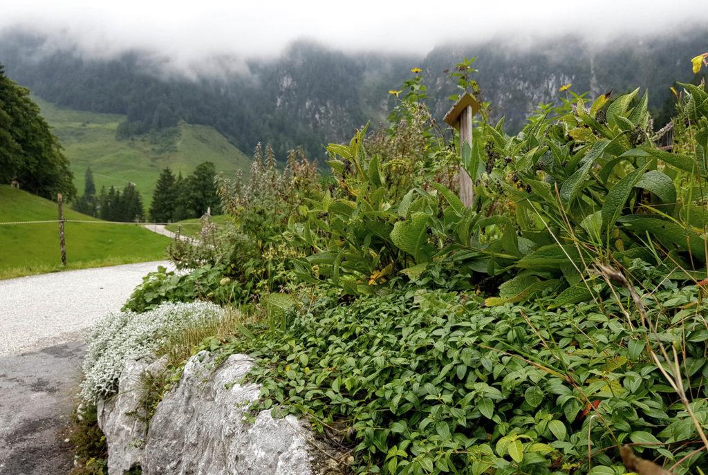 Almkräuterwanderung Kufsteinerland