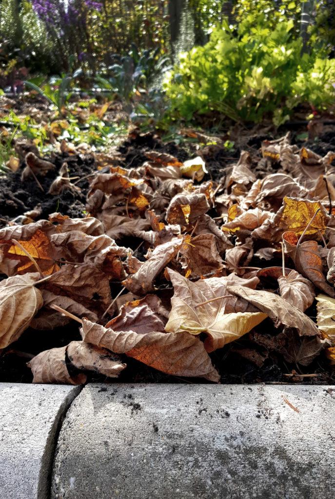 Gemüsegarten winterfest machen - Laubschicht zur Abdeckung des Bodens