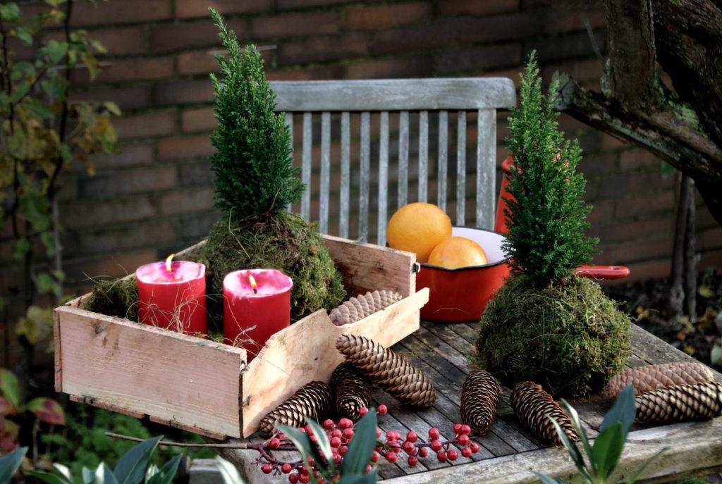 DIY Weihnachts-Kokedama - Kokedama mit Weihnachtsbaum