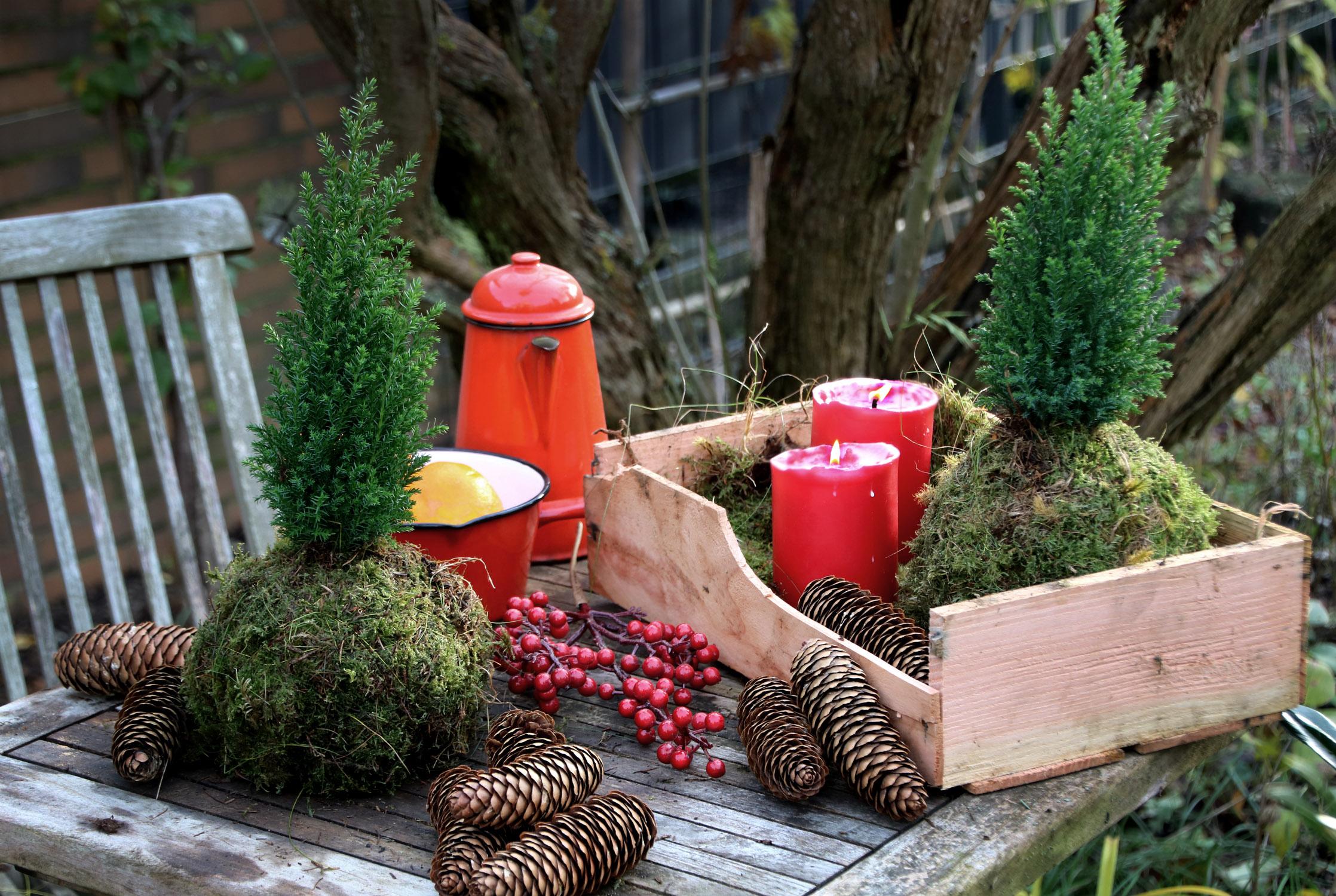 Weihnachtsdeko: Kokedama mit Weihnachtsbaum