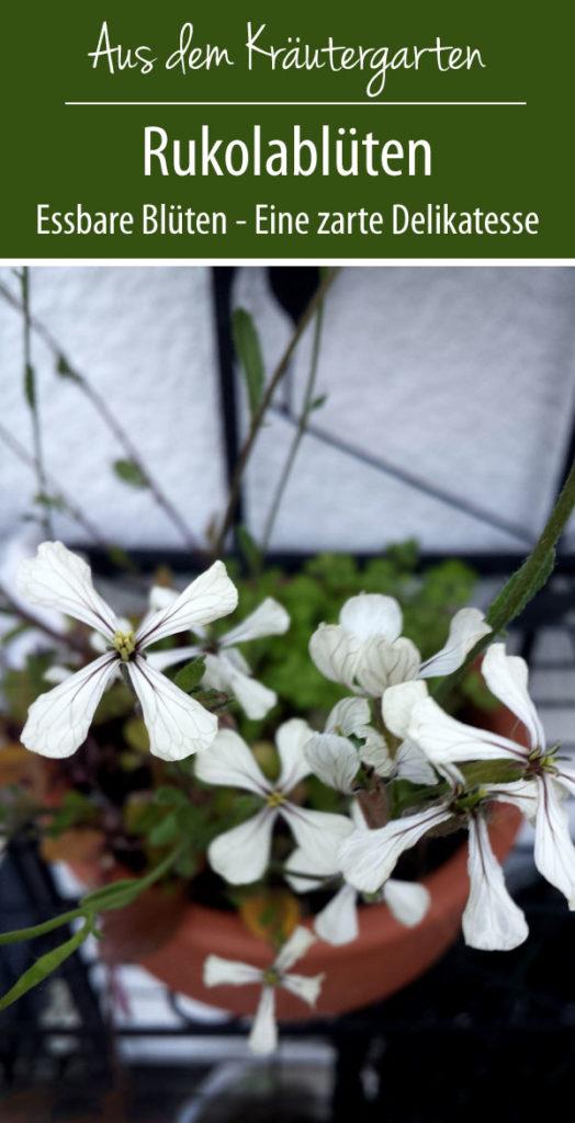 Blühender Rukola - eine zarte Delikatesse