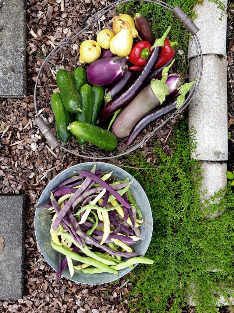 Gartenblog Grüneliebe Köln Gemüsegarten