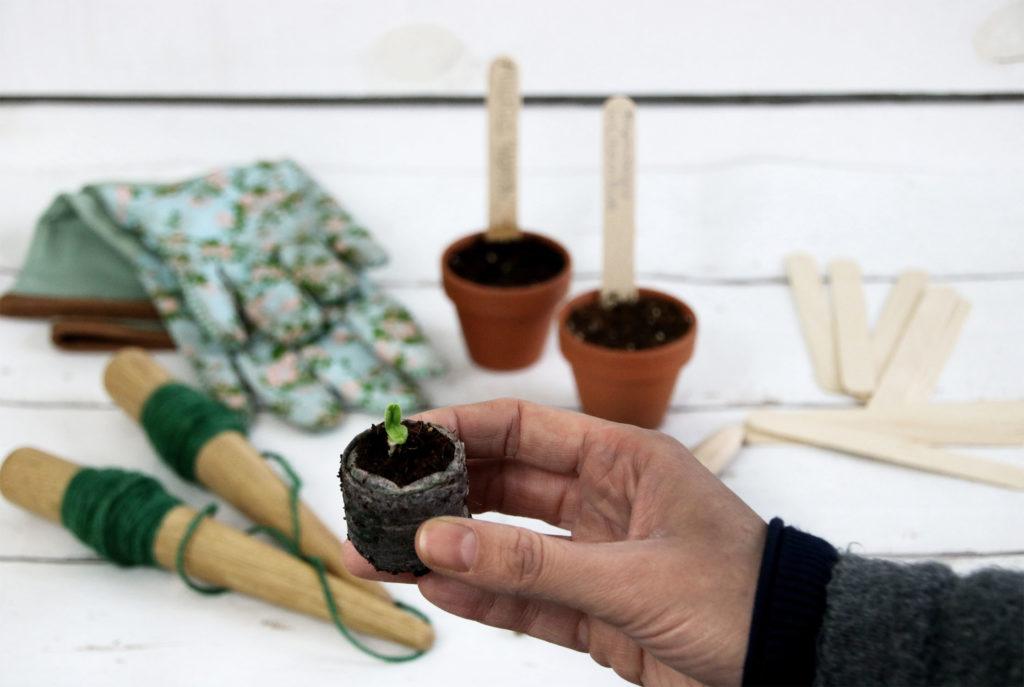 Anzuchttöpfe aus Kokostabs, Zellulose, Ton und Kunststoff