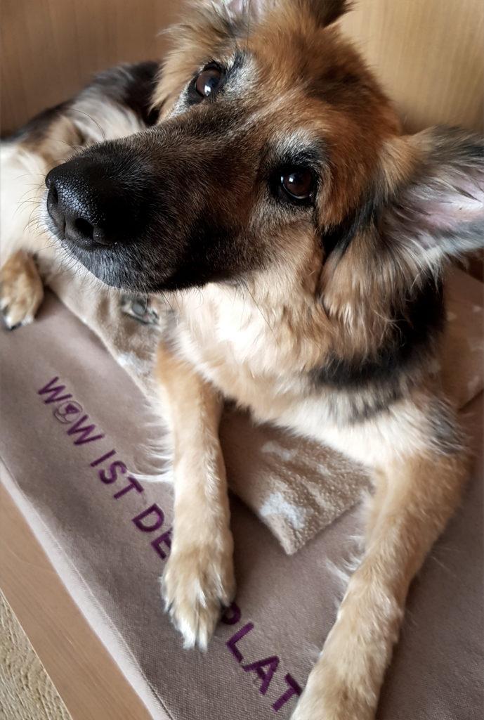 Urlaub mit Hund - Wau-Suite im Auszeit im G'sund & Natur Hotel Die Wasnerin Steiermark Österreich