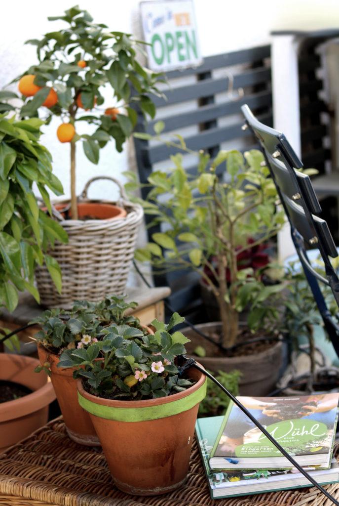 Praktisch für Urlaub und heiße Sommermonate Solarbetriebene Balkonbewässerung ohne Wasseranschluss