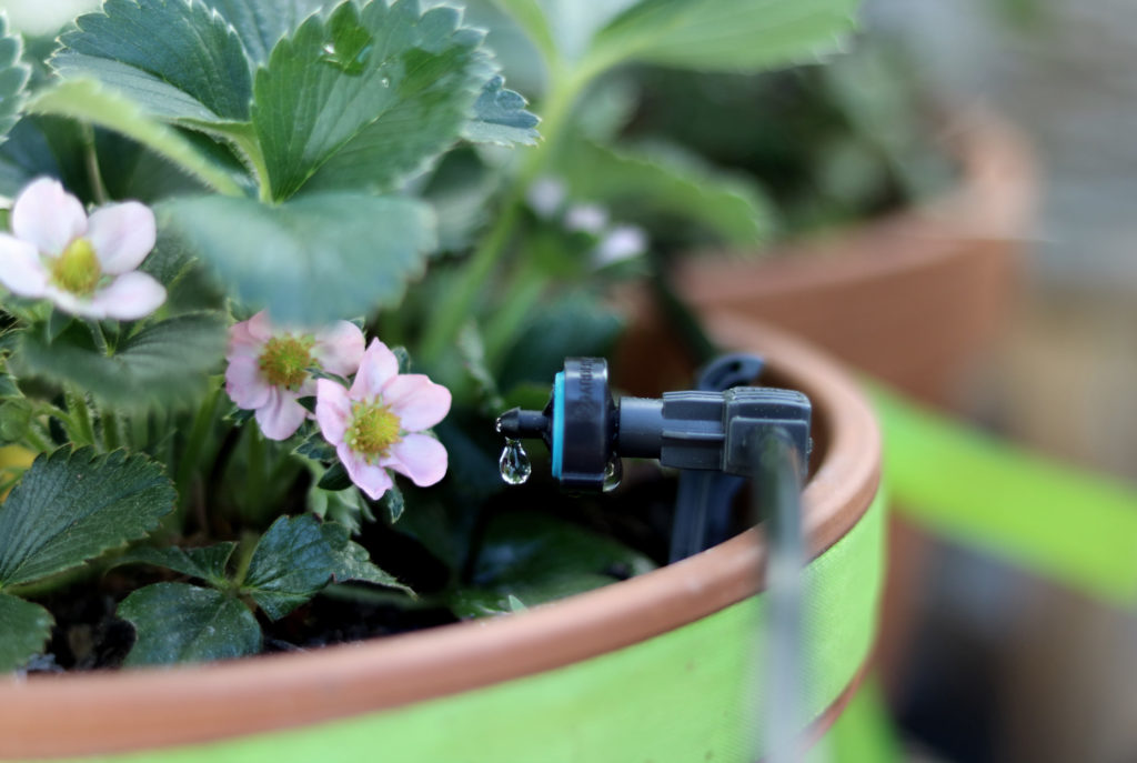 Solar-Bewässerungs AquaBloom Set Gardena