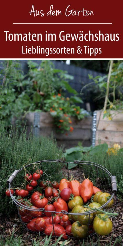 Tomaten im Gewächshaus Lieblingssorten und Tipps