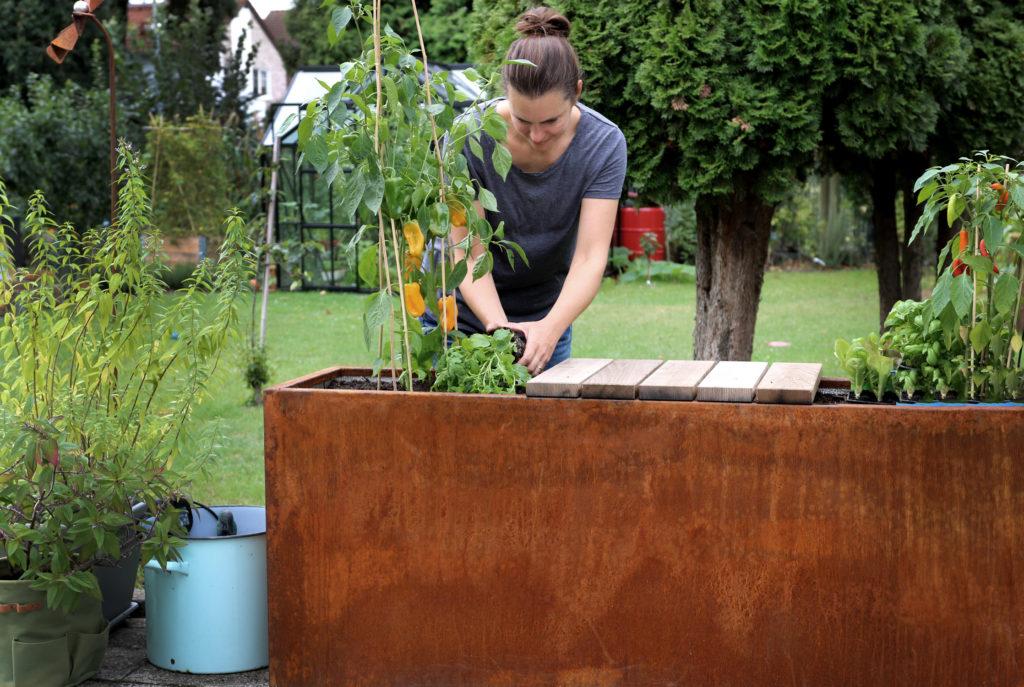 Hochbeet aus Cortenstahl Pflanzideen für Kräuter, Gemüse & mehr
